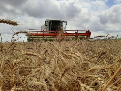 Крымские аграрии уже убрали 214 тысяч гектаров из общей посевной площади 730 тысяч гектаров
