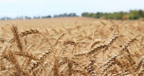 Минсельхоз Крыма заключил соглашения с 17 фермерами республики на получение средств грантовой поддержки
