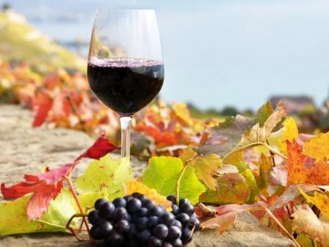 На фестиваль вина и гастрономии #Ноябрьфест зарегистрировались более 6 тысяч гостей