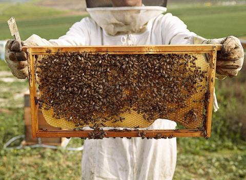 C 2015 по 2019 год крымские пчеловоды получили более 15 млн рублей средств грантовой поддержки