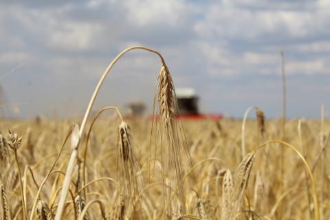 Андрей Рюмшин объявил  о завершении зерноуборочной кампании в Республике Крым